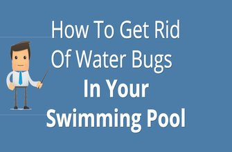 How To Get Rid Of Water Bugs In Your Swimming Pool Quick Easy